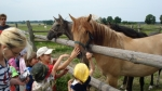 W stadninie koni